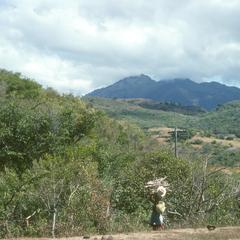 Gathering firewood near Jutiapa
