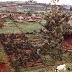 Countryside in Kikuyu Area with Houses and Fields