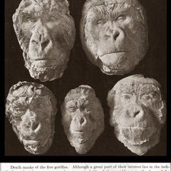 Gorilla Death Masks