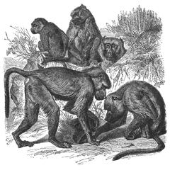 Macaque Group