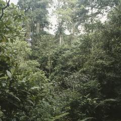 Tropical rainforest at La Selva Field Station