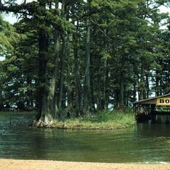 Landscape dominated by Bald Cypress