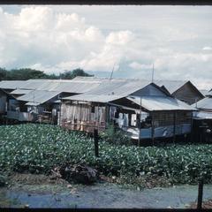 Stilt village with lotuses