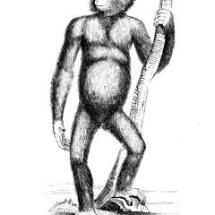 Chimpanzé, d'après un ancien vélin du Muséum.