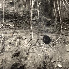 Stratified gravel in railway cut