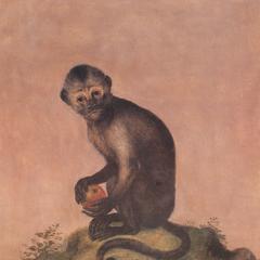 Seated Weeper Capuchin Print