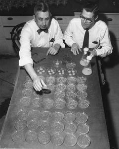 John Stauffer and Myron Backus studying cultures