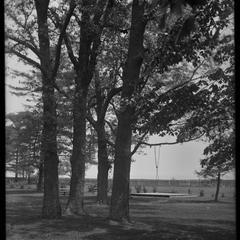 Kemper Hall oaks