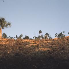 Sabal palms, cornfields on steep slopes, east of El Progreso