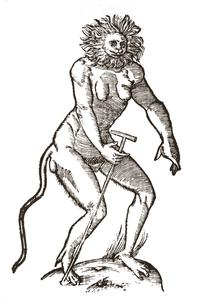 Gesner's Rare Cercopithecus