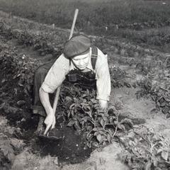 Victory Gardener
