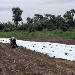 Woman planting yams at COWAN farm