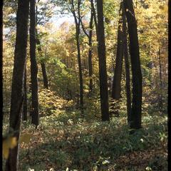 Fall view of Abraham's Woods, State Natural Area