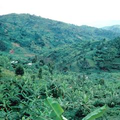Mixed Crop and Erosion in Steep Hills