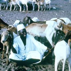 Malian Sheep Dealer