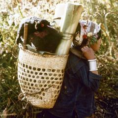 An Akha woman carries banana stalks in Houa Khong Province