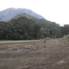 Valley floor of Río Grande, south of El Progreso