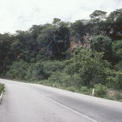 Cliff with teosinte, east of Teloloapan