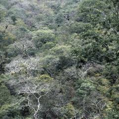 Dry tropical forest  near Aguas Calientes