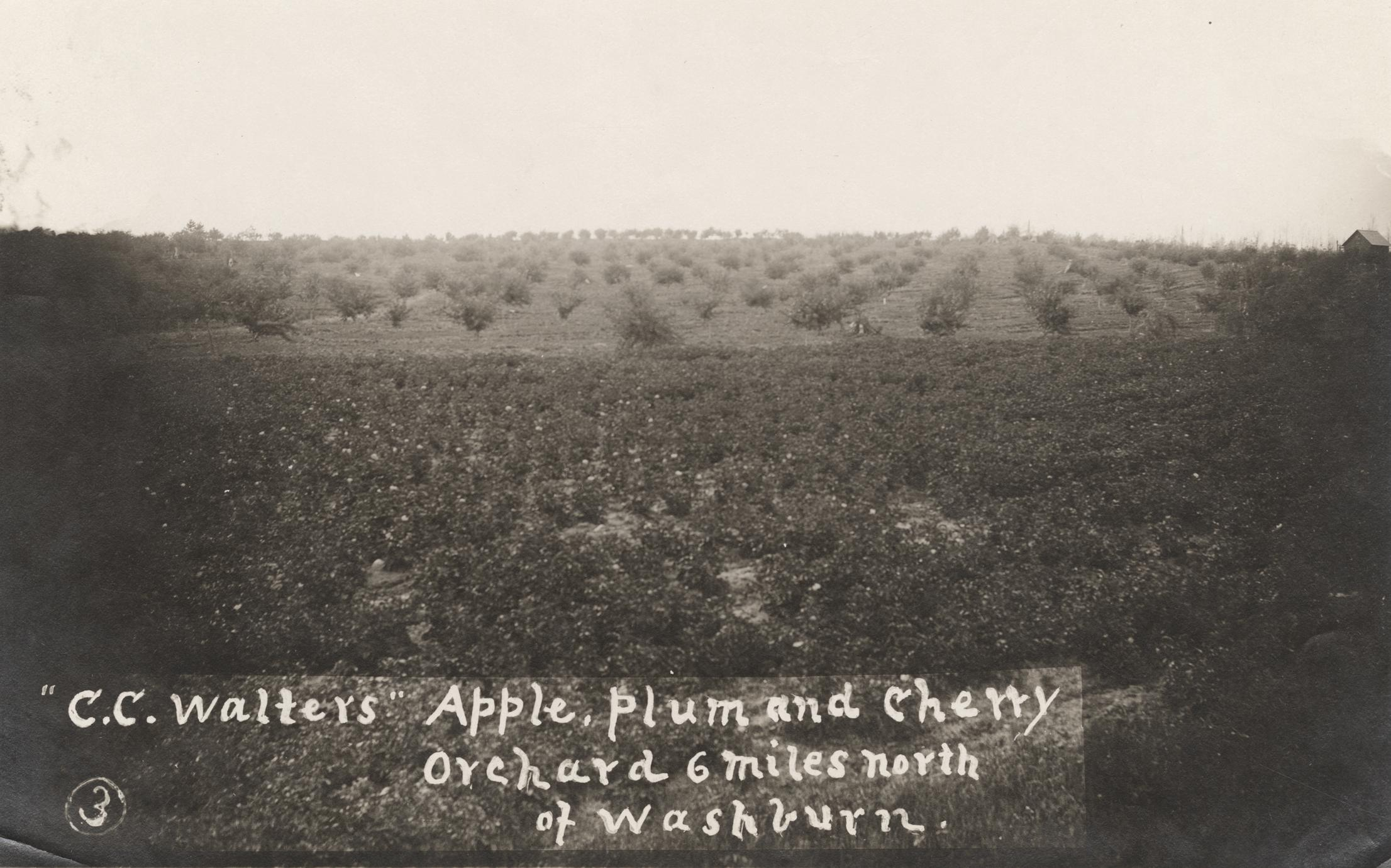 Apple, plum, and cherry orchard
