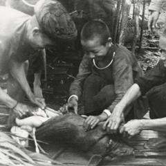 Two Akha men and boy butcher a pig in the village of Phate, Houa Khong Province