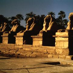 Ram-headed Sphinxes at Entry Way to Karnak Temple