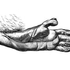Main postérieure de papion