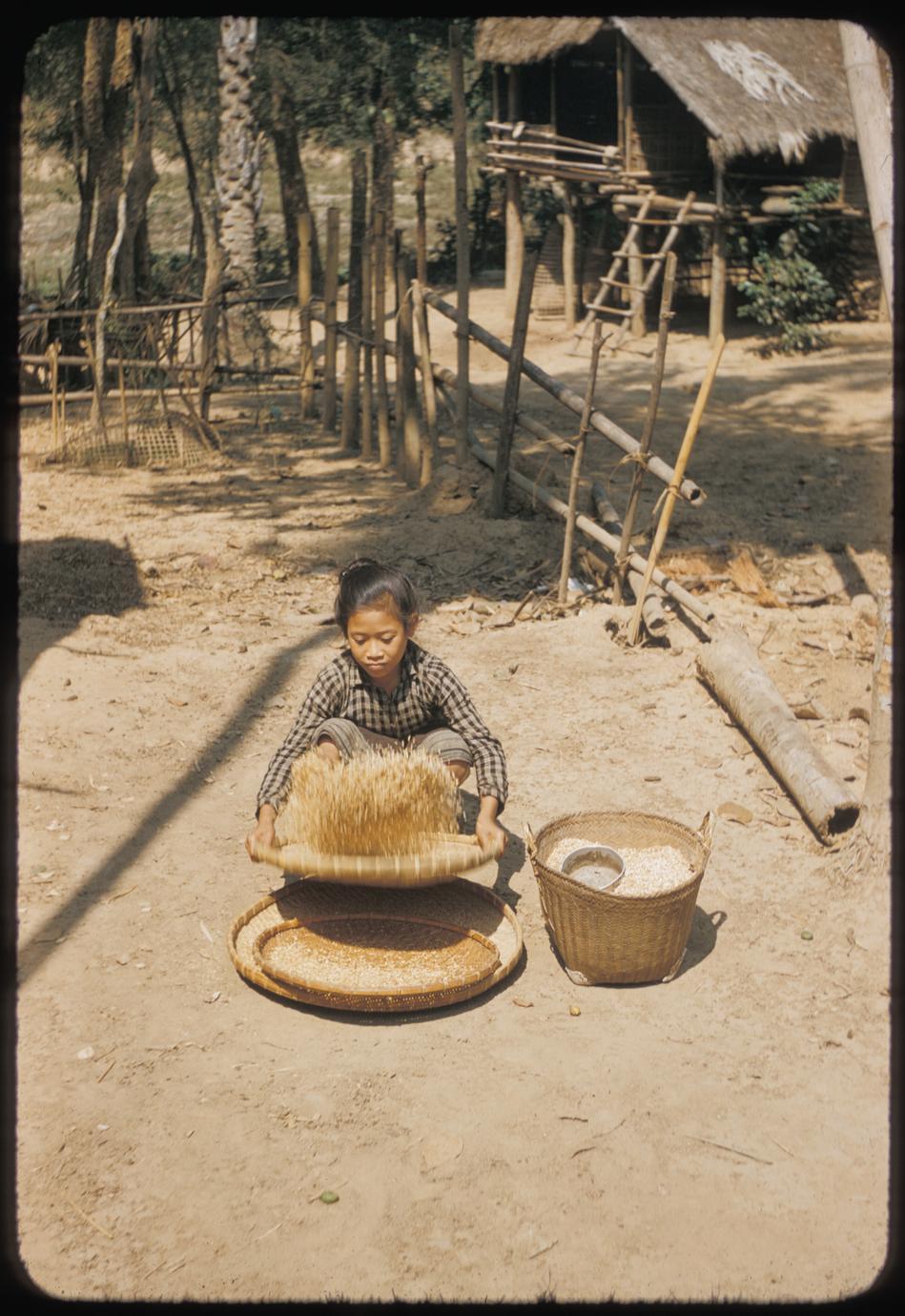 Girl winnowing rice
