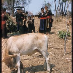 """""""Nyuj Dab"""" (Cow Spirit) ritual, image 01"""