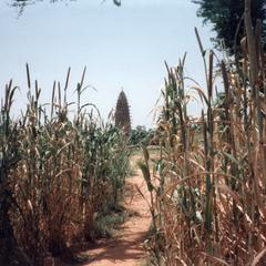 Mosque Through the Millet Fields
