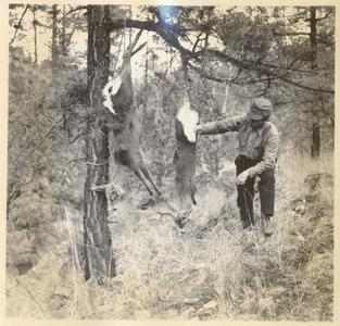 Carl on deer hunt, with doe carcasses hanging from tree branch, Chihuahua, Mexico, January 1938