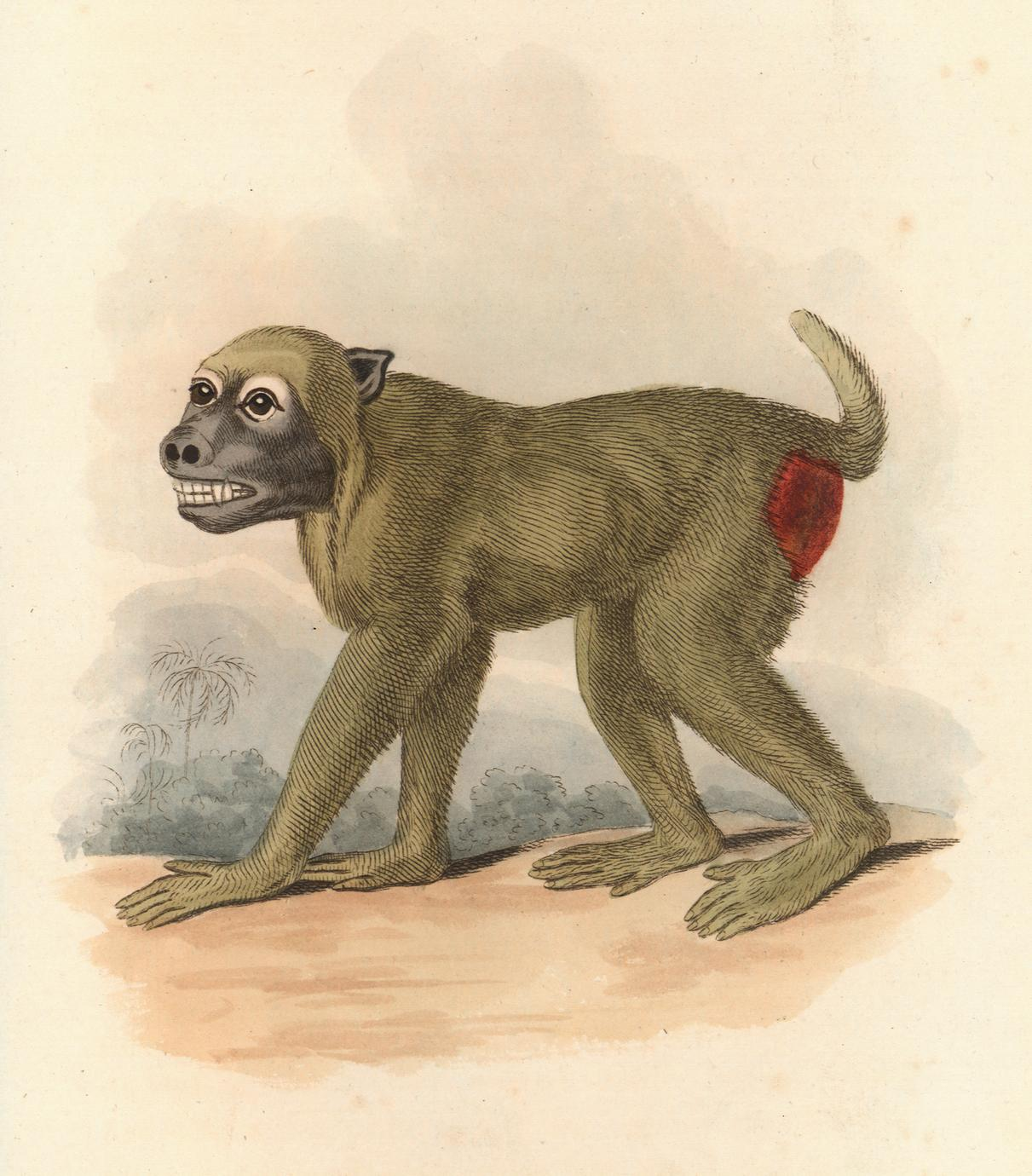 The Wood Baboon