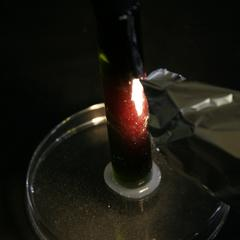 Fluorescence of pigment extract