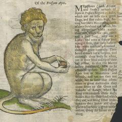Prasyan Ape