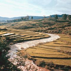 Terraced Rice Farms