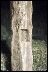 Hand hewn post in the barn at Hickory Hill, one of John Muir's boyhood homes