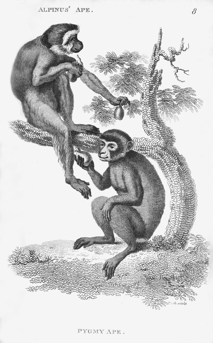 Alpinus Ape