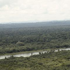 Rainforest and swampland, New Graytown