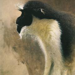 Studies of Diana Monkey