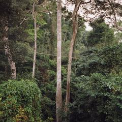 Long shot of rope bridge in Kakum National Park