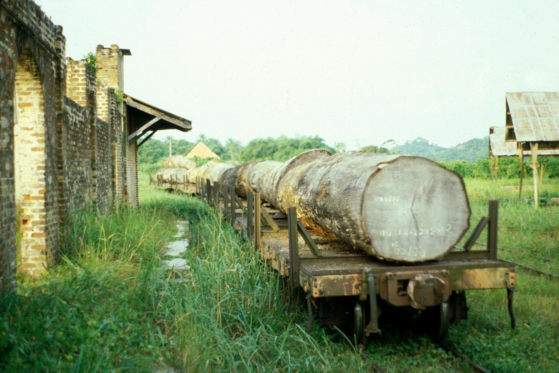 Hardwoods Loaded on Train