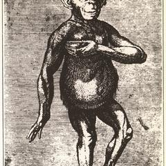 The London chimpanzee of 1738