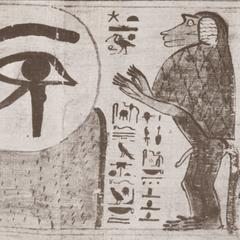 Egyptian Hamadryas Baboon Detail