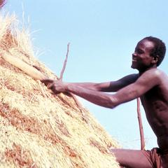 Close-up of Thatching a New Roof