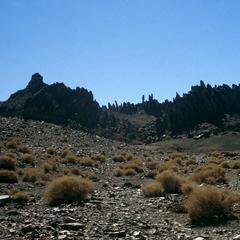 Rocks Resembling Trees in Desert Landscape