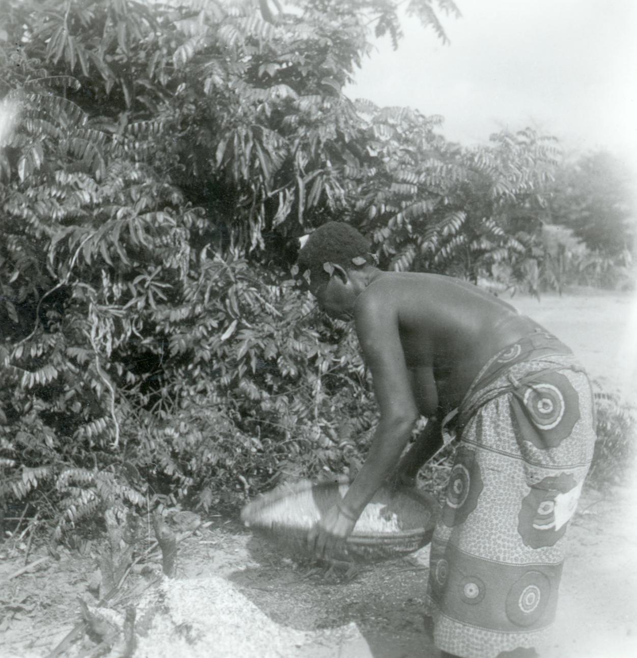 Sifting and Winnowing Cassava Flour in a Kuba-Ngongo Village