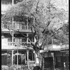 Yaami Hotel and tree