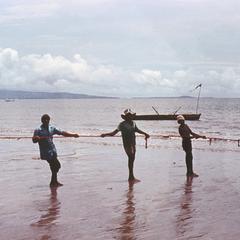 Pulling in Fish Nets at Mahera Beach North of Freetown