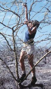 Gayle S. Davis-Merlen (Field Assistant) with Palo Verde Tree (Parkinsonia aculeata)