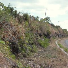 Teosinte, on Pan-American Highway